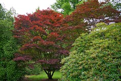 1273-18L (Lozarithm) Tags: maples k1 28105 bowood acers derryhill treesshrubs justpentax pentaxzoom hdpdfa28105mmf3556eddcwr