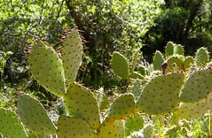 Zion National Park (somer_) Tags: zionnationalpark cactus nationalpark outdoors adventure utah film 35mm kodak kodakektar100 southwest zion