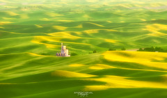 Solace in Solitude (- Aman Agarwal -) Tags: county sunset sunlight building yellow landscape photo lemon corn solitude alone wheat greens fields wa prints lime whitman colfax palouse solace steptoebuttestatepark fineartprints amanagarwalphotography amanagarwalphotographycom