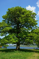 Untouched Nature (Bennii Photography) Tags: summer england sun lake holiday tree green relax warm lakedistrict dream