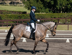 160703_YR_Champs_3707.jpg (FranzVenhaus) Tags: horses performance sydney australia competition event nsw athletes aus equestrian riders dressage siec
