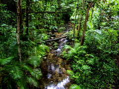 "Rainforest Stream • <a style=""font-size:0.8em;"" href=""http://www.flickr.com/photos/7605906@N04/27877494926/"" target=""_blank"">View on Flickr</a>"