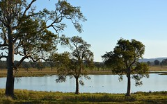 Swamp Box (dustaway) Tags: trees water australia nsw australianlandscape waterscape myrtaceae northernrivers australiantrees richmondvalley swampbox lophostemonsuaveolens strathedenwetlands