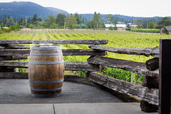 barrel view (kevin.boyd) Tags: canada church bay vineyard bc view state central barrel victoria bistro winery grapes brentwood wines saanich