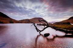 Crummock Water evening (pixellesley) Tags: longexposure lake mountains beach grass clouds reflections spring rocks branch lakedistrict windy pebbles hills cumbria chilly moor crummockwater photomix magicunicornverybest magicunicornmasterpiece bestevergoldenartists kurtpeiserexcellence