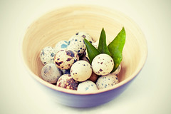 quail_eggs7-small (danilaflomaster) Tags: wood food white bird cooking cup nature kitchen breakfast easter cuisine wooden healthy dish natural little farm decorative background small egg shell bowl gourmet container health poultry organic copyspace diet utensil isolated protein quail tableware woodendish ingredien