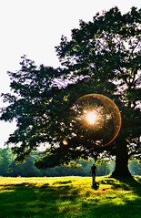 MIKE6885-QuinnTree- (mt_photo) Tags: shadow sun ny newyork tree grass evening twilight buffalo estate east shade aurora lensflare knox wny eastaurora mikethomas michaelthomas knoxfarm mtphoto