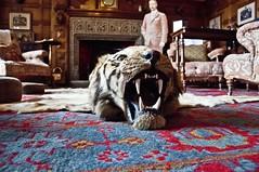 Caution Trip Hazard (Tony Shertila) Tags: england europe cornwall interior tiger rug manor nationaltrust bodmin lanhydrock briatin countryestate pydar mygearandme