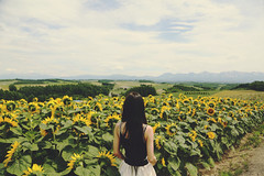 Sunflower Field (Amanda Mabel) Tags: summer portrait sky mountains flower japan clouds back hokkaido sister sunflowers faceless furano flowerfarm flowerfield sunflowerfield amandamabel
