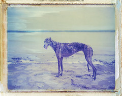 Kino in Cairo, IL (moominsean) Tags: greyhound polaroid illinois kino midwest cairo mississippiriver instant convergence ohioriver 190 humid iduv thelittledoglaughed expired032007