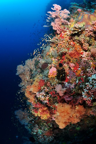 great wall pantar island