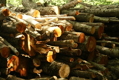 46 (cloud io) Tags: wood mountain tuscany toscana bosco abetone tronchi taglialegna
