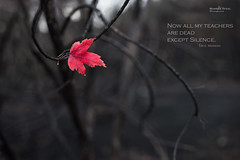 Silence.. (muneeb1988) Tags: autumn 35mm leaf twilight nikon with photos f14 quotes silence d600 samyang wsmerwin impressedbeauty nowallmyteachersaredeadexceptsilence