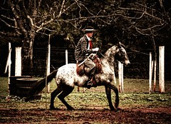 na lida das rédeas.... (mauroheinrich) Tags: costumes brasil nikon cavalos nikkor nikondigital gauchos ctg riograndedosul cultura pampa lida mtg tradicionalismo gaucho guri cavaleiros cavaleiro gaúcho tradição gaúchos peão tradições peões nikonians 18200vr ibirubá tropeiros rédeas nikonprofessional d300s campereadas ranchodostropeiros 9ªrt nikonword mauroheinrich