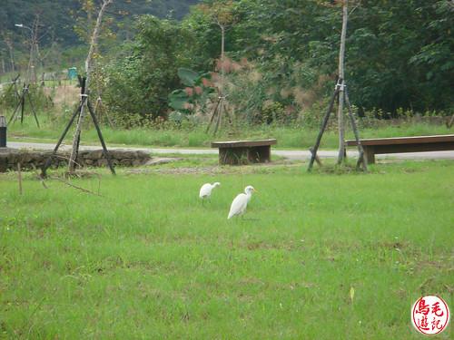 山水綠生態公園 (5).jpg