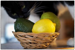 Still life with assistant (jmschrei) Tags: stilllife fruit cat avocado lemon bokeh pear fa5014 pentaxk5
