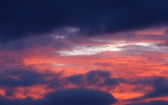 The eyes are watching you. (artanglerPD) Tags: sunset sky color birds clouds eyes rich