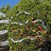 Trees_of_Loop_360_2013_198