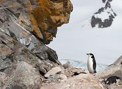 (Foto Blitz Color) Tags: antarctica antarctic