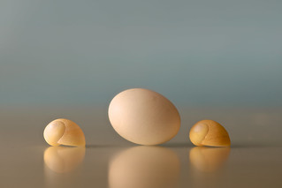 Egg and shells (2)