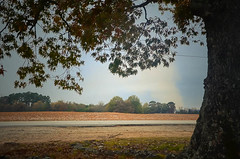 a good spot to stop (Vanessa Faye) Tags: tree field leaves rural countryside smoke country farming harvest burning treeline oaktree countryroad cottonfield burninginthebackground smokeinthedistance