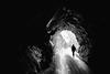 strada alta (2013) (Toni_V) Tags: bw monochrome schweiz switzerland tessin blackwhite ticino suisse hiking 28mm rangefinder tunnel svizzera wanderung m9 svizra sep2 2013 elmaritm stradaalta niksoftware messsucher ©toniv 130602 leicam9 mygearandme l1012198