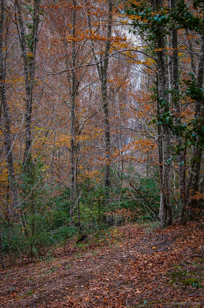 El camino entre hojas