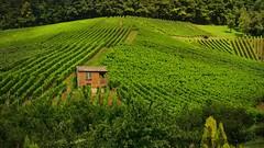 Weinberge bei Heilbronn, mitten im Grn,  70032/2916 (roba66) Tags: nature natur vinha vignoble vinedo weinberg trauben vigneto traubenlese naturalezza abigfave imlndle roba66 vision:mountain=0599 vision:outdoor=0963 vision:plant=0882