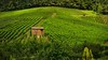 Weinberge bei Heilbronn, mitten im Grün,  70032/2916 (roba66) Tags: nature natur vinha vignoble vinedo weinberg trauben vigneto traubenlese naturalezza abigfave imländle roba66