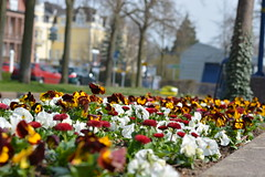 Frhling in Bad Wildungen (S. Molitorisz) Tags: bad blumen ostern frhling wildungen brunnenallee