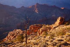 Last rays- Grand Canyon (Samir D) Tags: light sunset terrain usa tree america canon us colorado grandcanyon nevada northamerica rough lightshadow 2014 sigma1020 canon40d canon40dcanon samird