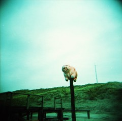 IMG_0004 (spoeka) Tags: sea streetart holland beach strand analog square pig holga lomo xpro lomography sand meer thenetherlands slide dia analogue expired schwein 120mm stmaartenszee holgacfn mittelformat kodakektachromee200