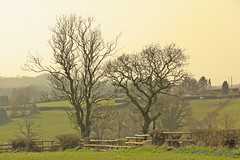 Thoughtful (cattan2011) Tags: trees houses horses nature landscape farm fineart fencing
