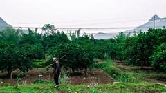 2014 9 Xing Ping (17) (SirLouisLau95) Tags: china spring guilin yangshuo     xingping