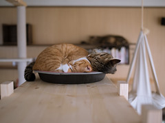 . (rampx) Tags: cat pentax kittens neko 猫 ねこ irori maru kotaro miaw 645z