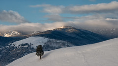 It's a Big, Big World Out There (dbushue) Tags: trees winter snow mountains nature landscape nikon scenery hills valley vista yellowstonenationalpark wyoming ynp 2014 lamarvalley dailynaturetnc14 dailynaturetnc15