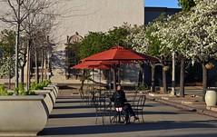 balboa park blooming trees (SHERI..) Tags: infocus highquality