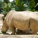 """Rhino • <a style=""""font-size:0.8em;"""" href=""""http://www.flickr.com/photos/128593753@N06/16351107437/"""" target=""""_blank"""">View on Flickr</a>"""