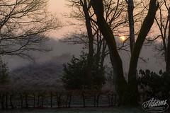 AP15-5409 Sunrise (Jan-Willem Adams) Tags: zonsondergang nederland bos gelderland garderen zonsopkomst zonneland fordjw janwillemadams adamsphotography