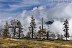 paesaggio, landscape (paolo.gislimberti) Tags: trees alberi piemonte piedmont larches conifers cloudysky mountainlandscape conifere cielonuvoloso larici paesaggiodimontagna alpinegrassland prateriaalpina