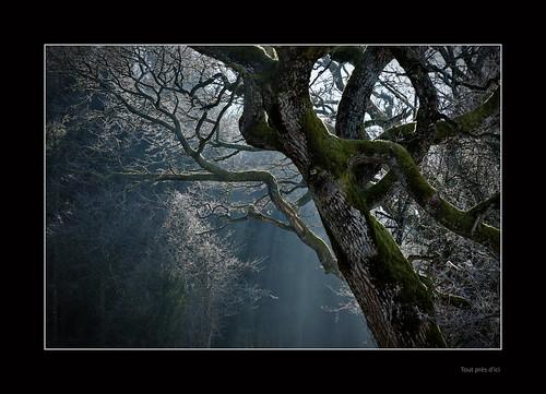 """Dans son calme comme à son comble • <a style=""""font-size:0.8em;"""" href=""""http://www.flickr.com/photos/88042144@N05/16547760211/"""" target=""""_blank"""">View on Flickr</a>"""