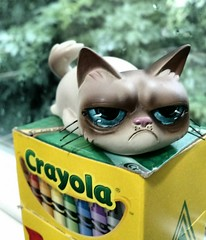 Blech kind of day (Lawdeda ) Tags: color was fan long time indoor it terrible stupid tuesday had wish mad figurine crayola grumpycat i not