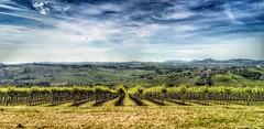 Oltrepo', morning landscape. (Eilis88) Tags: morning italy panorama landscape countryside hills vineyards lombardia paesaggio colline lombardy rovescala oltrepo vigneti