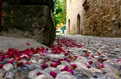 (Halit Volkan Cengiz) Tags: pink red canon eos purple floor rodos rhodes 60d  halitvolkancengiz