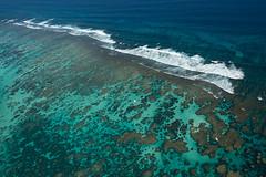 WA Coral Bay - Reef -3097