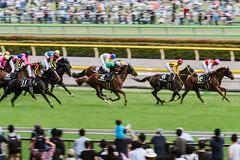18-6-2 (ken_tsuda) Tags: horse green grass japan race tokyo nikon nikkor 70200 f28 kota kentsuda 20160605hhourseracing8900