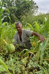 Joo Baptista Zeferino - Foto: Priscila Marins (itaborairj) Tags: merenda maio agricultura alimentao