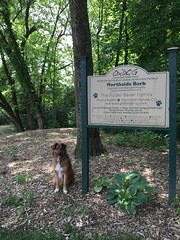 My very last stop before I head out. (JenWaller) Tags: dog mutt travis dogpark odp oxforddogpark