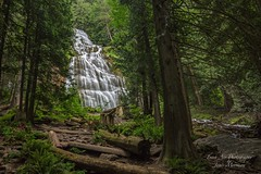 Bridal Veil Falls - through the trees (Freshairphotography) Tags: park trees nature water forest waterfall explore waterfalls bridalveilfalls provincialpark chilliwack naturesart beautifulbc expored cascadingwaterfalls ilovebc bridalcreek