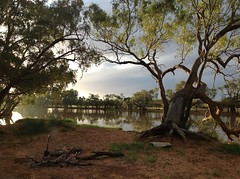One of our better campsites on the way up from Oodnadatta (spelio) Tags: simpson 2016 camp river billabong lagoon clouds perfect waterhole campsite good sa australia swimming hole tree red gum peace serenity eringa